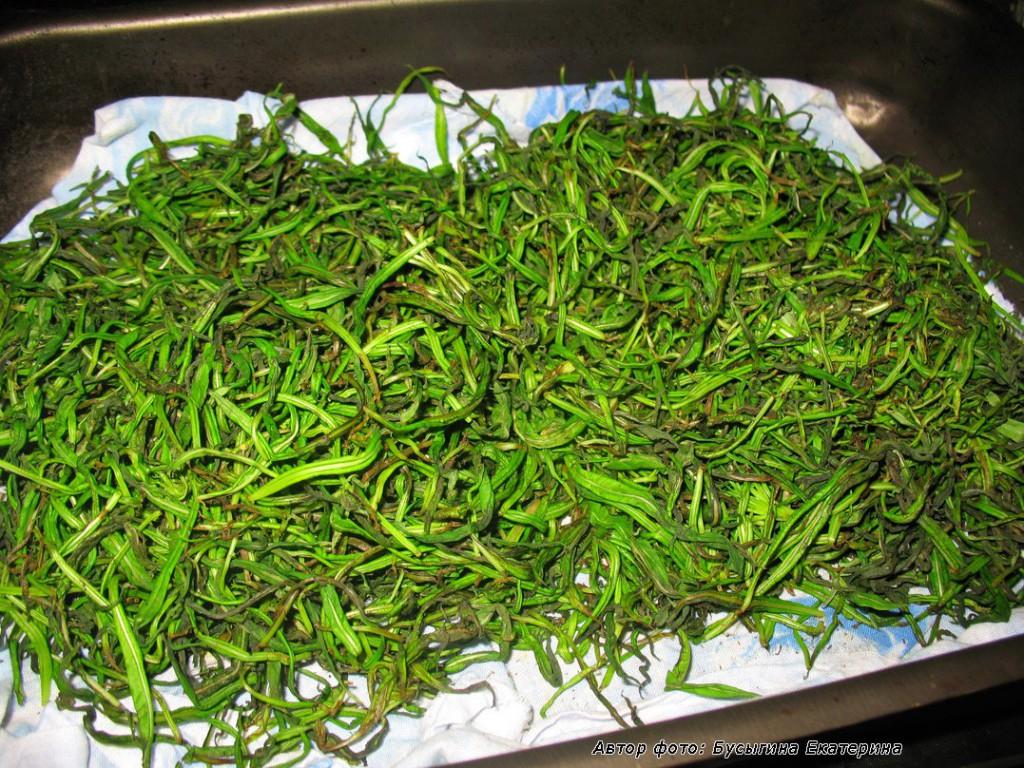 Нежные верхние листочки иван-чая начали ферментироваться. Скручены ладонями.