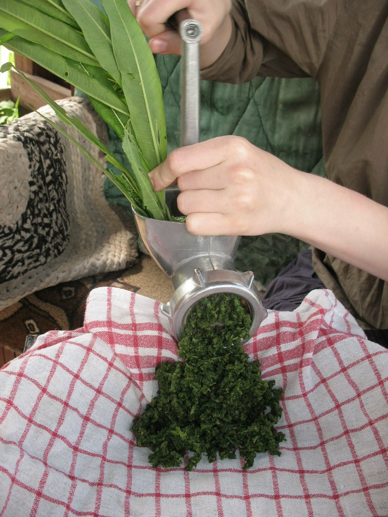 Иван чай ферментация в домашних условиях через мясорубку 162